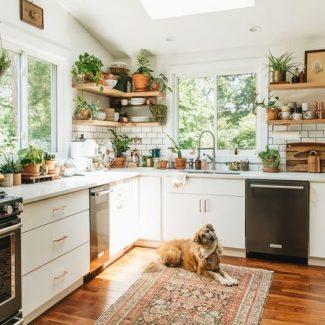 Cuisine arborant de nombreuses plantes suspendues et de succulentes sur ses comptoirs