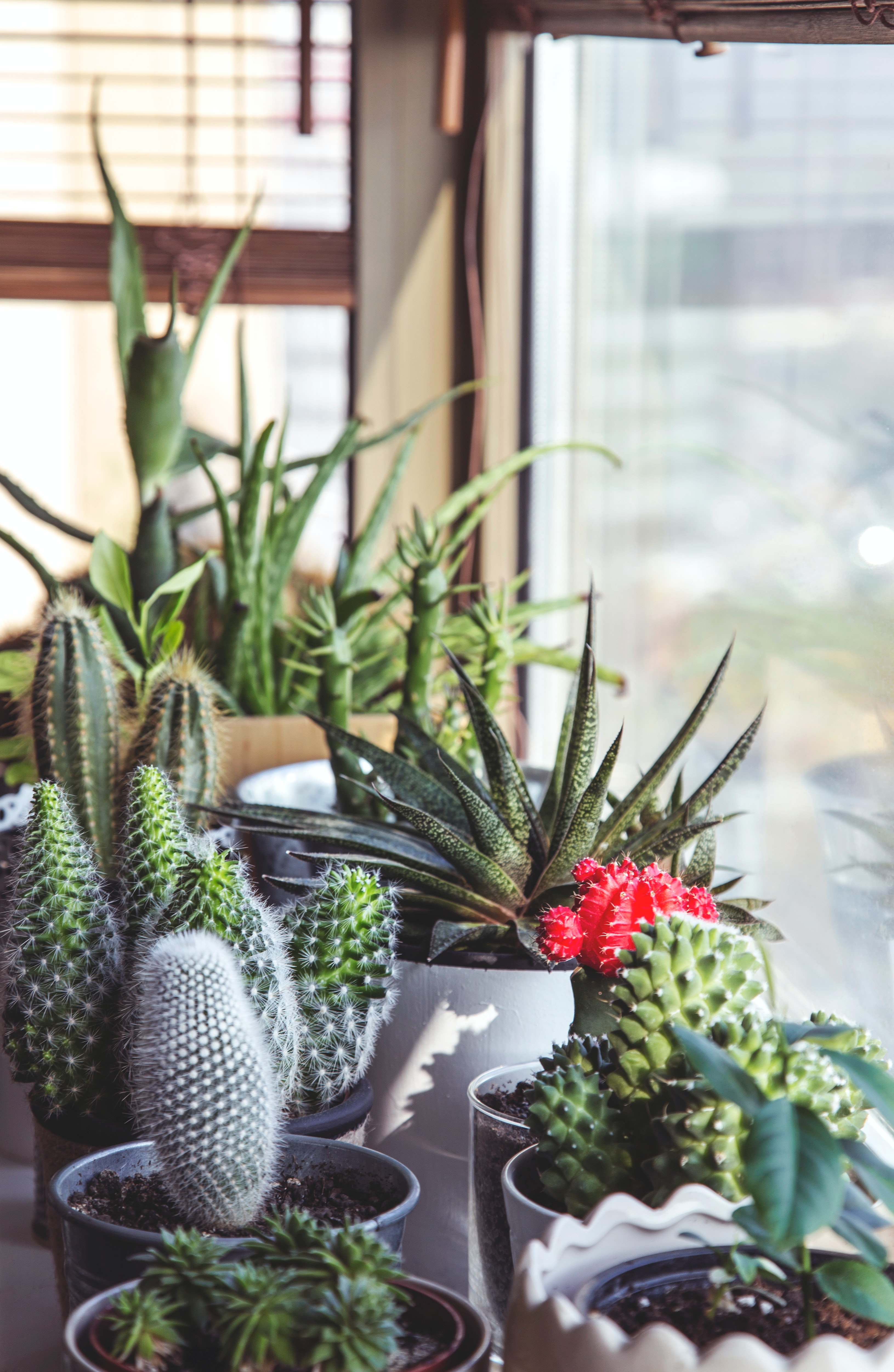 Different varieties of cacti arranged on a window sill